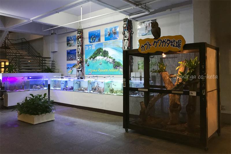 ホテルムーンビーチ館内ビーチフロアの自然観察コーナー