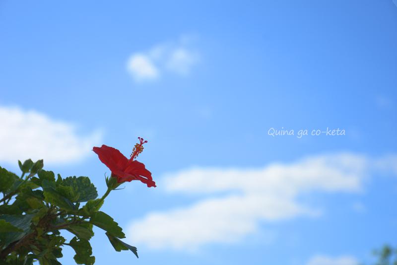 沖縄っぽい写真No.1(青空とハイビスカス/2018年12月15日撮影)