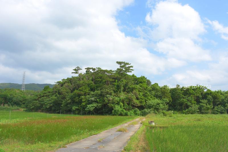 畑の中にポコッとあるヨリブサノ御嶽(金武町屋嘉)