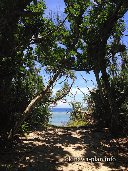 久高島の木々の向こうに広がる海