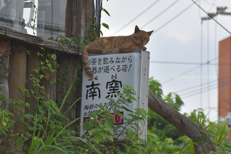 ブラタモリ沖縄-那覇編で猫ちゃんに話しかけていた