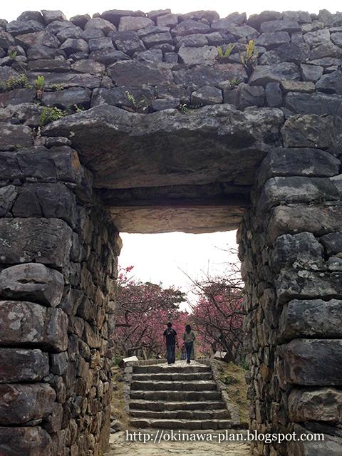 1月下旬-今帰仁グスクの寒緋桜
