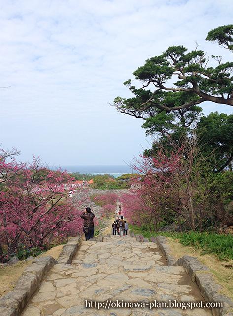 今帰仁村の桜まつり