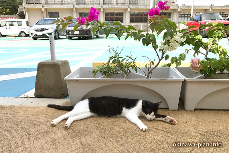 暑さにのびた猫