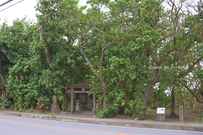 ハスノハギリの林(名護市宮里)
