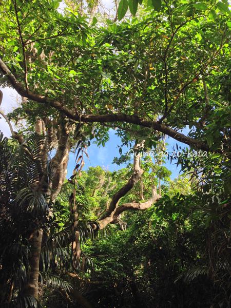 婚姻届を提出する日にフボー御嶽で見上げた空(沖縄県南城市・久高島)